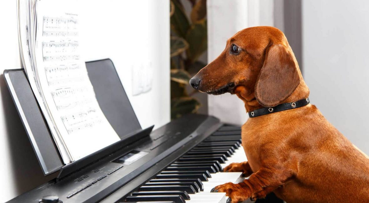 12 Easy Songs To Play On Keyboard And Piano