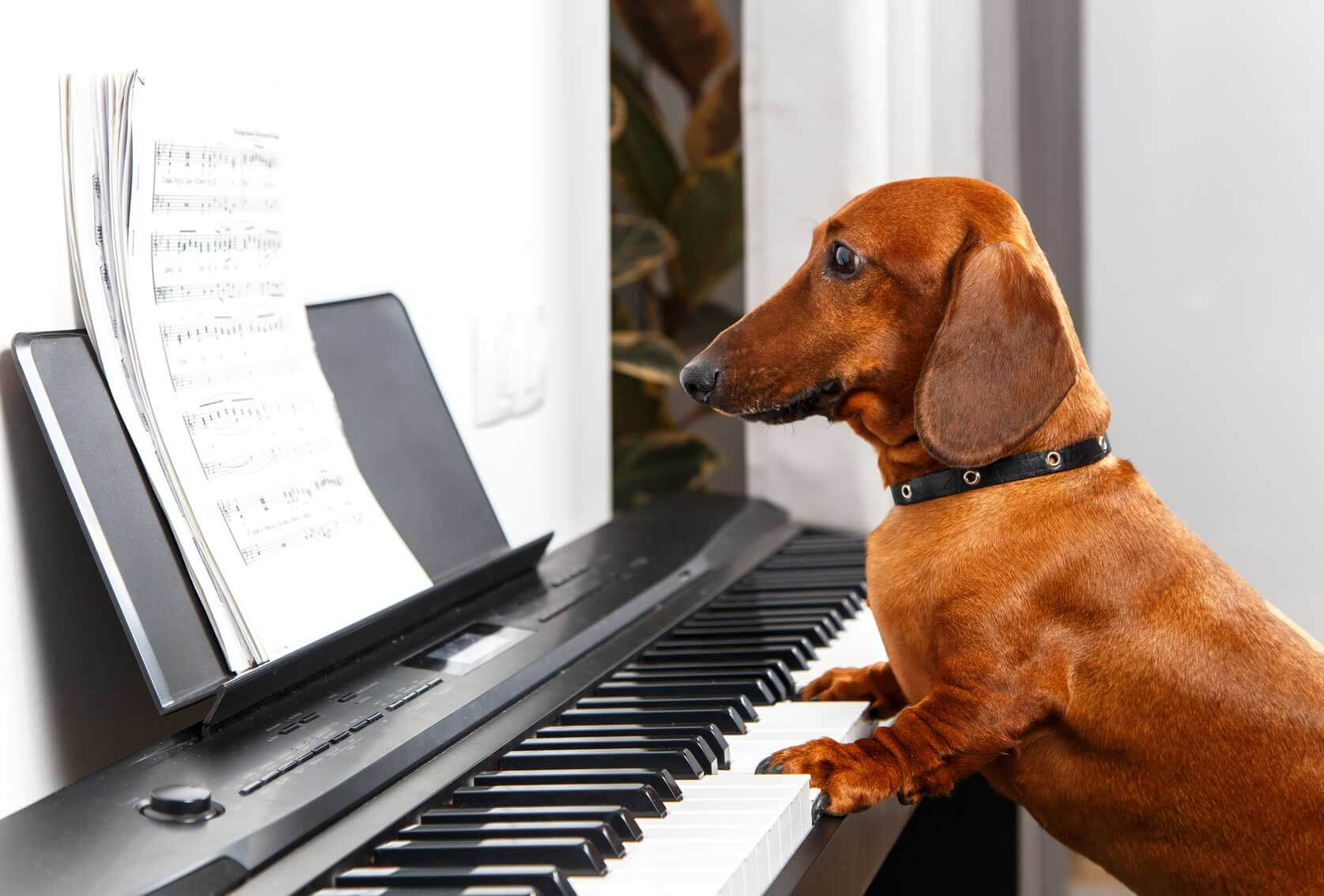 learn Easy Songs To Play On Piano. Our list of easy songs for piano will help you get better.